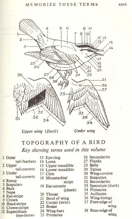 bird_parts_1