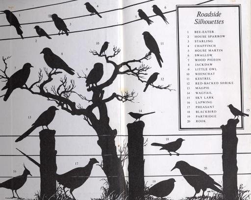 Flyleaf of Collins Birds og Great Britain and Europe