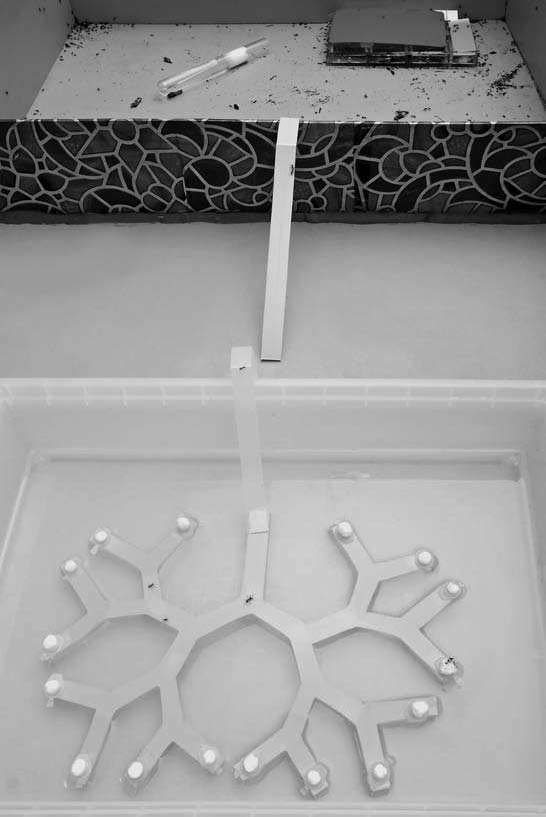 Artificial ant nest and a binary tree maze placed in a bath with water. Photo by Nail Bikbaev.